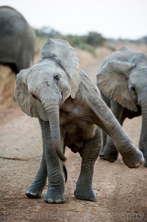 Happy World ElephantDay!