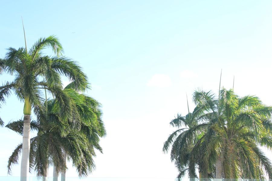 Hello, Aruba!